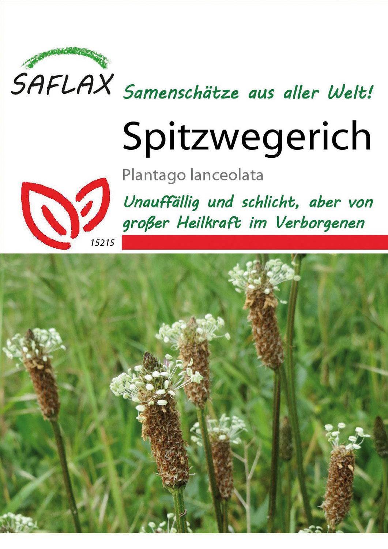 Mein Heilpflanzengarten - Spitzwegerich