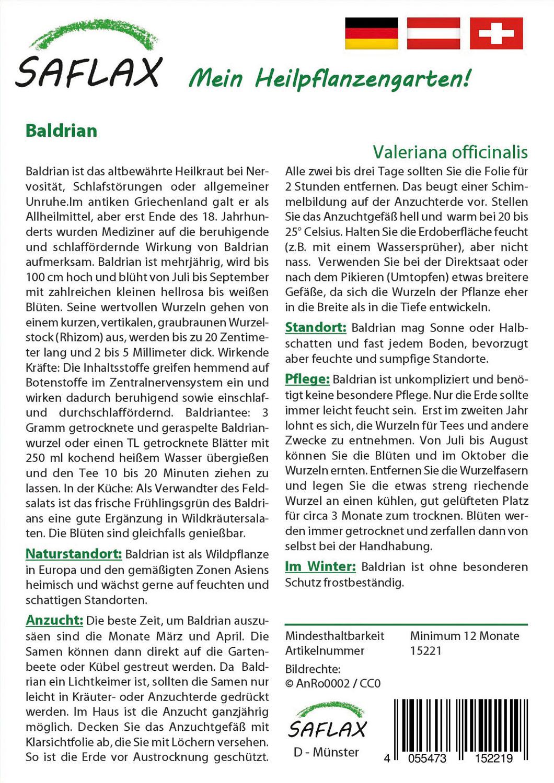 Mein Heilpflanzengarten - Baldrian Bild 2