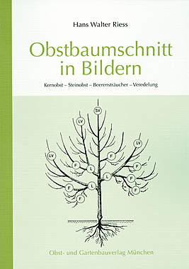 Obstbaumschnitt in Bildern_small
