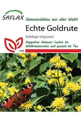 Mein Heilpflanzengarten - Echte Goldrute