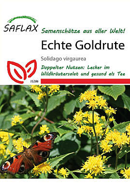 Mein Heilpflanzengarten - Echte Goldrute_small