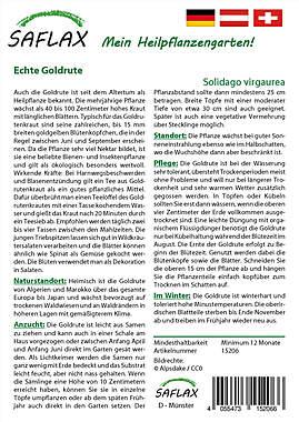 Mein Heilpflanzengarten - Echte Goldrute_small01