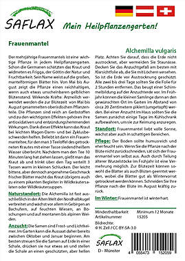 Mein Heilpflanzengarten - Frauenmantel_small01