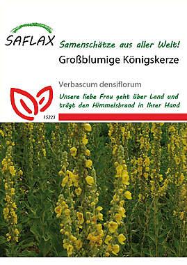 Mein Heilpflanzengarten - Großblumige Königskerze