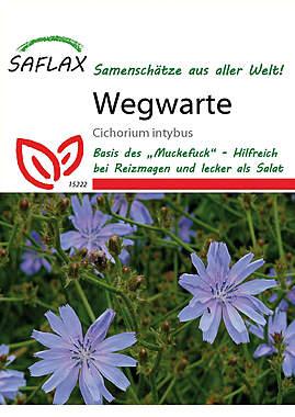 Mein Heilpflanzengarten - Wegwarte_small
