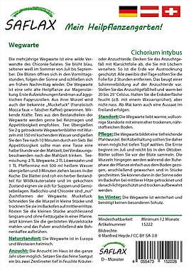 Mein Heilpflanzengarten - Wegwarte_small01