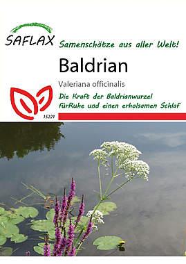 Mein Heilpflanzengarten - Baldrian_small