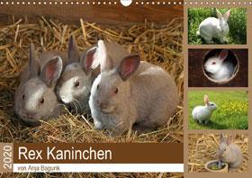 Rex - Kaninchen Wandkalender 2020 DIN A3 quer - Mängelartikel_small