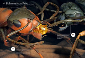Das Ameisenkollektiv_small01