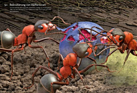 Das Ameisenkollektiv_small02