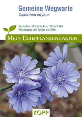 Gemeine Wegwarte - Mein Heilpflanzengarten_small
