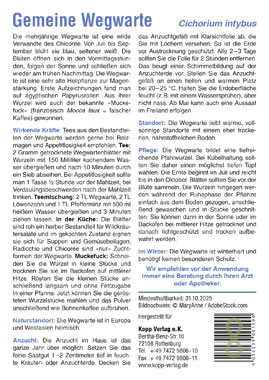 Gemeine Wegwarte - Mein Heilpflanzengarten_small01