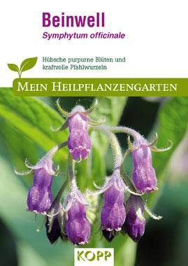 Beinwell - Mein Heilpflanzengarten_small