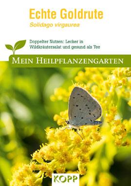 Echte Goldrute - Mein Heilpflanzengarten_small