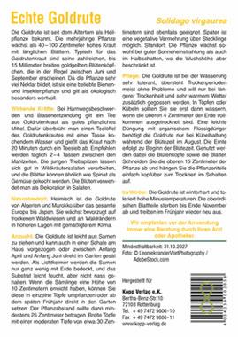 Echte Goldrute - Mein Heilpflanzengarten_small01