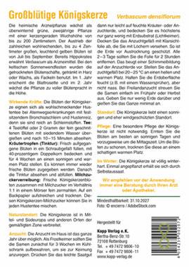 Großblütige Königskerze - Mein Heilpflanzengarten_small01