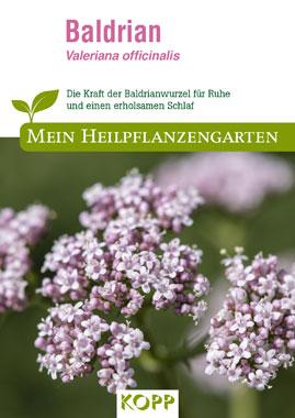 Baldrian - Mein Heilpflanzengarten_small