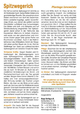 Spitzwegerich - Mein Heilpflanzengarten_small01