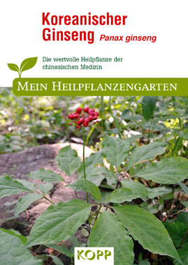 Koreanischer Ginseng - Mein Heilpflanzengarten_small