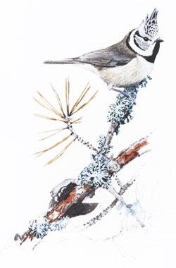 Wintervögel_small02