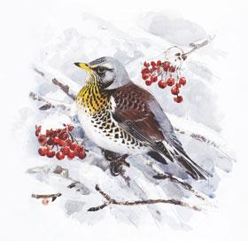 Wintervögel_small04