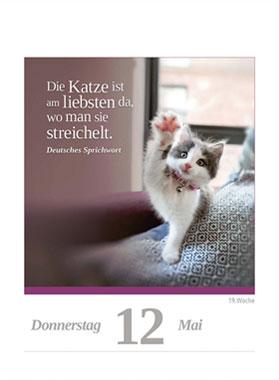 Eine Katze für jeden Tag 2022_small04
