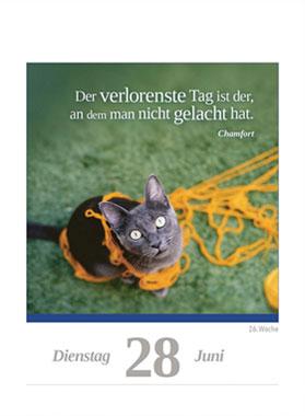 Eine Katze für jeden Tag 2022_small05