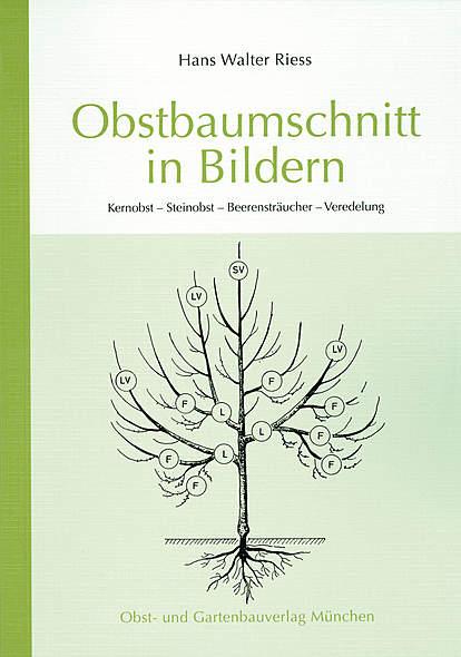 Obstbaumschnitt in Bildern