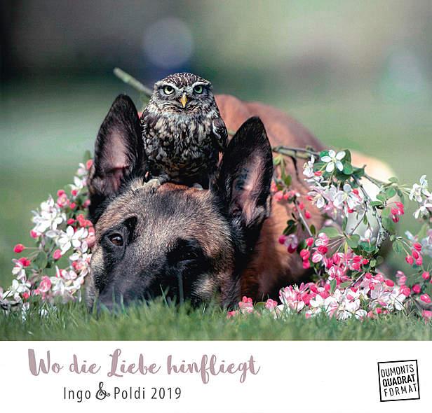Wo die Liebe hinfliegt 2019