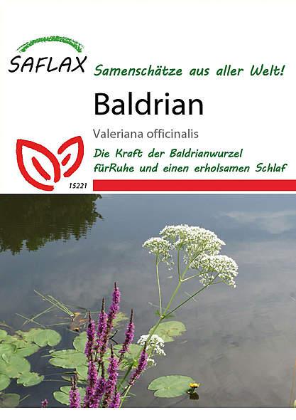Mein Heilpflanzengarten - Baldrian