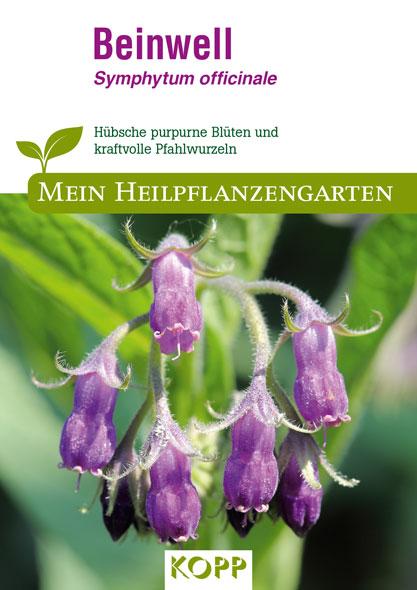 Beinwell - Mein Heilpflanzengarten