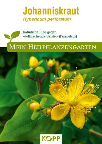 Johanniskraut - Mein Heilpflanzengarten