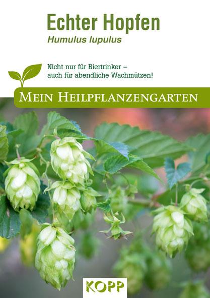 Echter Hopfen - Mein Heilpflanzengarten