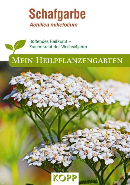 Schafgarbe - Mein Heilpflanzengarten