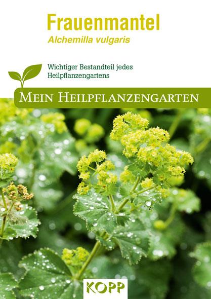Frauenmantel - Mein Heilpflanzengarten