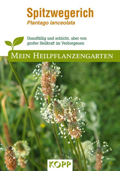 Spitzwegerich - Mein Heilpflanzengarten