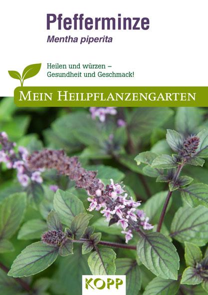 Pfefferminze - Mein Heilpflanzengarten