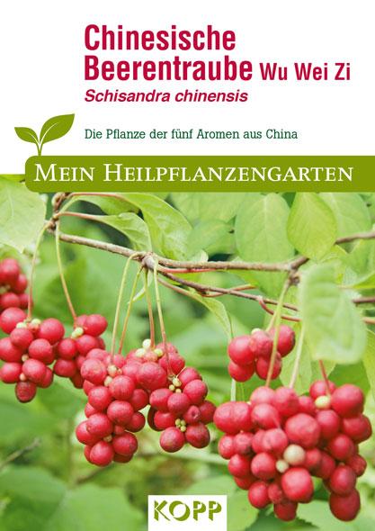 Chinesische Beerentraube Wu Wei Zi - Mein Heilpflanzengarten