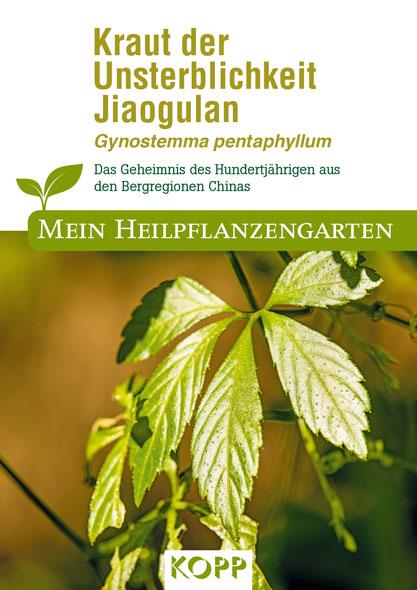 Kraut der Unsterblichkeit Jiaogulan - Mein Heilpflanzengarten