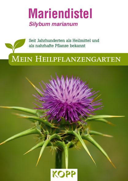 Mariendistel - Mein Heilpflanzengarten