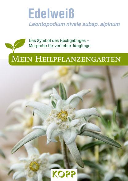 Edelweiß - Mein Heilpflanzengarten