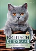 Britisch Kurzhaar_small